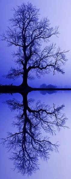 Beautiful reflection in blue!