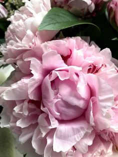 Pale pink peonies ... if ever there was a perfect flower... #swimmingpoollandscapingideas