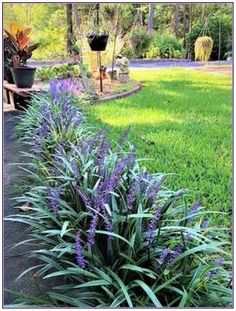 Home Improvement, Home Repair And Home Renovation Monkey grass easy care plant. Also known as monkey grass, liriope provides evergreen color, seasonal flower spikes, and fall and winter berries. Garden Design, Front Yard Landscaping Design, Plants, Outdoor, Shade Garden, Lawn And Garden, Outdoor Gardens, Outdoor Plants, Garden Planning