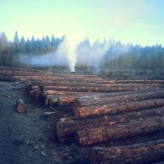 Mroooźny poranek i ogniska płoną #lasypaństwowe #lasy #leśnictwo #forestry #morning #poranek #dzieńdobry #monday #poniedziałek #jest #pięknie #sosna #tartaraczka #tartaczka #świerk #wypalanie #mroźny #dzień #zamykamy #rok #Polska #Pomorze #picoftheday by _lymantria