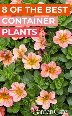 These 8 plants will add easy-care color to your patio Meet 8 of our favorite container plants for colorful, easy-care containers all season. Patio Plants, Outdoor Plants, Plants For Planters, Outdoor Gardens, Shade Garden Plants, Summer Plants, Outdoor Flowers, Outdoor Landscaping, Landscaping Ideas