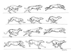A quick study of the dog in motion. No more than a few minutes spent on each drawing. Sakura Gelly Roll pen on animation paper. Reference used: Horses and other Animals in Motion by Eadweard Muybridge