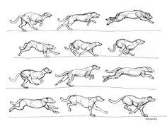 Greyhound running by ~RenegadeStudios on deviantART