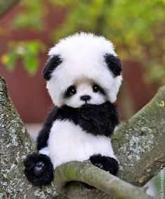 Baby Panda 🐼 ❤️ Tag your friends!Photo by ©Inna Borzenkova 10 Best Art Ideas Baby Panda 🐼 ❤️ Tag your friends!Photo by ©Inna Borzenkova A photo posted by Art ( on Niedlicher Panda, Panda Art, Cute Panda, Cute Animals Images, Animal Pictures, Adorable Animals, Cute Cats And Dogs, Dogs And Puppies, Fluffy Animals
