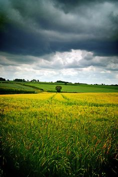 Storm over barley, The Cotswolds, England byGiles Clare  All it needs is blackbirds swirling in the air.