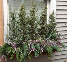Winter Window Box with Evergreens