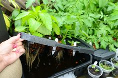 DIY Hydroponic System | The More One Sows; The Greater The Harvest