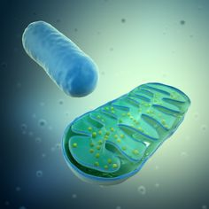 Read about the report that blocking calcium ions flux into mitochondria can induce the death of cancer cells.