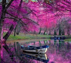 濃いピンクが珍しい。水面に映るピンクとボートのツートンカラーが面白くマッチしている。