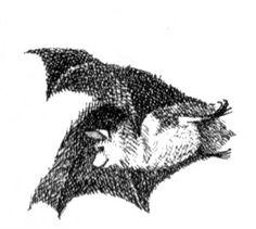 The Bat Poet - artwork by Maurice Sendak. Bat Light, Maurice Sendak, Illustration Art, Animal Illustrations, Paint Photography, Cross Hatching, Stippling, My Spirit Animal, Bats