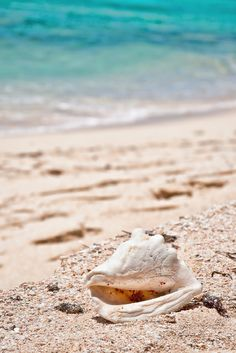 Grand Turks and Calicos (I found a few shells like this as well as a  full sea sponge and a sea fan, sea Glass )