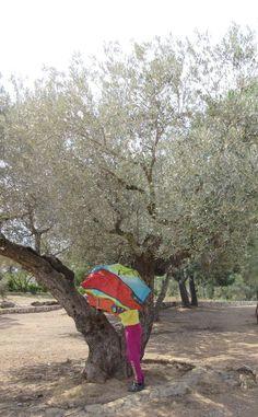 Parapluies et oliviers...