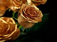 The roses in the garden were yellow, she thought. But when she came near, the roses turned out to be shining gold.