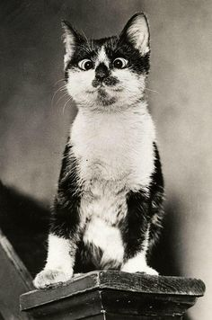 """""""The smart cat doesn't let on that he is."""" --H G Frommer  Cross eyed kitty!!! So cute"""
