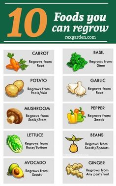 How to grow vegetables from scraps plants 53 Trendy Ideas H. - How to grow vegetables from scraps plants 53 Trendy Ideas How to grow vegetabl - Growing Veggies, Growing Plants, Growing Tomatoes, Growing Herbs Indoors, Starting Seeds Indoors, Green Onions Growing, Growing Bell Peppers, Growing Carrots, Easy Plants To Grow