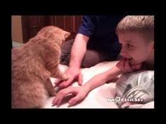 Cat Wants Your Hands Down