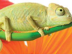 Vertebrados: los reptiles | Escolar | Series | ElPopular.pe