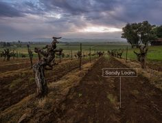Understand the basics when it comes to soil types and wine.