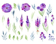 Watercolor flower clipart: 21 purple violet by WatercolorCliparts