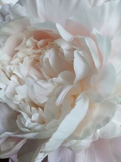 Pale pink peony All peonies are my all time absolute favorite flowers.  I love them sooo much.  Some day my house will be surrounded by peony bushes...