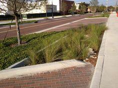 Kissimmee Lakefront Park.  Parking area run off basin - Rain Garden