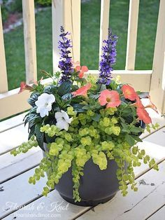 Beautiful planter with purple salvia, creeping jenny, coral petunias, and white impatiens | flourishandknot.com