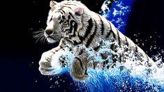 Mobile 3d Animal Wallpaper Wild Animal Wallpaper, Leopard Wallpaper, Tiger Wallpaper, Background Hd Wallpaper, Background Images, Tiger Images, Tiger Pictures, Lion Images, Tiger Artwork