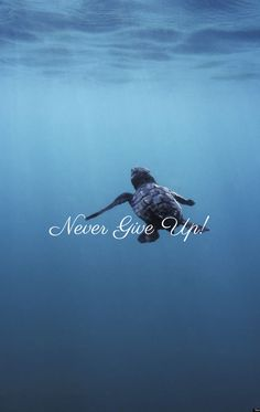 Never ever, for there is a future for turtles!