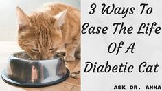 3 Ways To Ease The Life Of A Diabetic Cat So your cat has been diagnosed with diabetes? Treatment of Beat Diabetes, Diabetic Tips, Diabetic Dog, Diabetic Cake, Cat Care Tips, Pet Care, Diabetic Living, Diabetes Treatment, Gatos