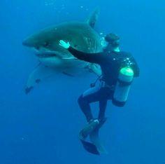 Big bad fishie!
