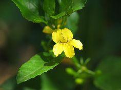 All Plants - victorianflora Australian Flowers, Australian Plants, All Plants, Native Plants, Shrubs, Planting Flowers, Garden Design, Environment, Medium