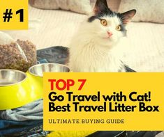 Traveling with the best travel litter box, both of you will have a good time together. You'll definitely want to check out about this portable litter box. Litter Box With Lid, Cat Litter Tray, Best Cat Litter, Sand Cat, Tidy Cats, Clumping Cat Litter, Cat Carrier, Boxes, Reading