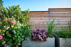 Terrasse mit Sichtschutz aus Holz und Hochbeeten. Weitere Ideen für Ihre Terrasse finden Sie auf tulpenbaum.at Plants, Design, Green Living Rooms, Garten, Ideas, Flora, Plant, Design Comics, Planting