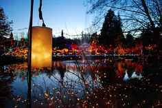 Van Dusen Botanical Garden, Vancouver - At Christmastime there are over One Million Lights! Vancouver Vacation, Green Initiatives, Christmas Wonderland, Angels In Heaven, Festival Lights, Twinkle Lights, Parks And Recreation, Botanical Gardens, West Coast