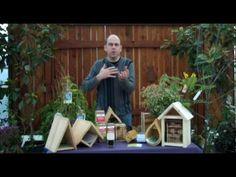 Six Essentials for Successfully Raising Mason Bees