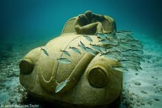 Underwater sculpture by J. Decaires Taylor.