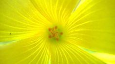 The sun in the Little Flower (3)