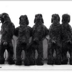 """Bouvier """"Bear"""" bottoms"""
