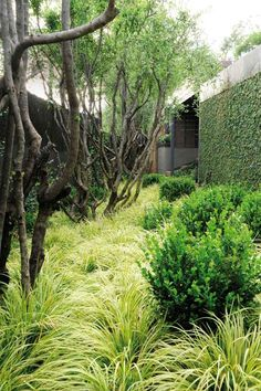 "Textured plantings on the floor and creepers on the walls help to absorb sound. Clumps of grasses thickly cover the ""floor"" of the garden but the walls have been utilised by growing self-clinging creepers on them. Evergreen climbing fig, is particularly effective for sound absorption."