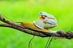 Taxi-escargot !
