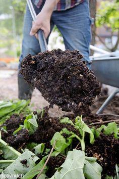 Kohopenkki puutarhaan - lue vinkit! Kohopenkin avulla saat satoa, vaikka maaperä olisi huono tai piha pieni.