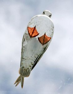 seagull on a glass roof.