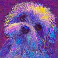Rainbow Shih Tzu - dog art