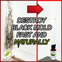 Destroy Black Mold Fast and Naturally