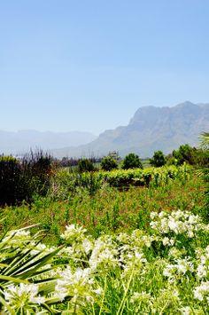 Stellenbosch, South Africa   lark&linen