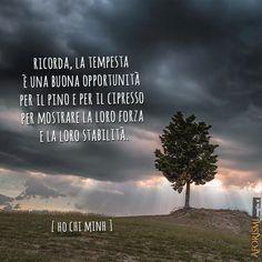 Ricordate, la tempesta è una buona opportunità per il pino e per il cipresso per mostrare la loro forza e la loro stabilità.