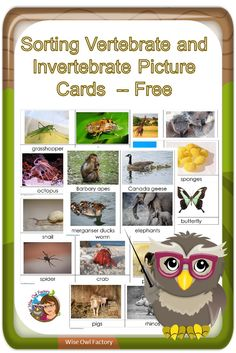 Invertebrates and Vertebrates Card Sort Free PDF — Pre-K and primary grades and could be used in a science center. via Carolyn Wilhelm, Wise Owl Factory Montessori Science, Preschool Science, Teaching Science, Science Education, Science For Kids, Summer Science, Primary Teaching, Science Fun, Physical Science