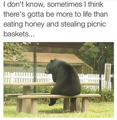 Here, we see a bear in its natural habitat, pondering over life while sitting at a picnic table.