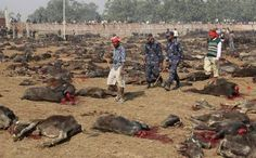Aksharadhool: Nepal's senseless religious carnage This mass carnage or culling of healthy animals, should never happen again. I can understand killing of an animal or a bird in a slaughterhouse for meat or even mass culling them to prevent spread of some deadly disease. But this senseless Gadhimai carnage, that takes us back to medieval periods, can not be justified on any basis at all