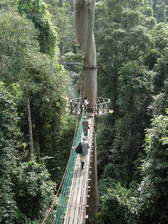 Rainforest Canopy Walkway, Borneo